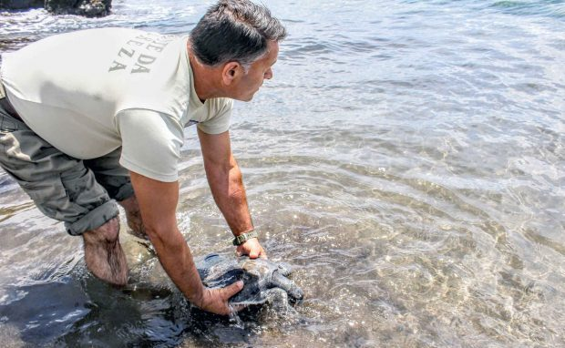 Vigilantes da Natureza salvam tartaruga-boba