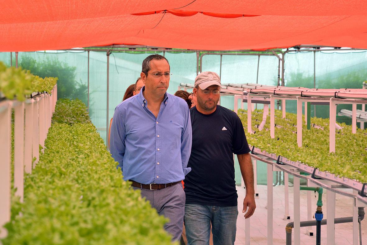 Governo dos Açores já aprovou este ano projetos de investimento em hortícolas com recurso à hidroponia no valor de 1,2 ME