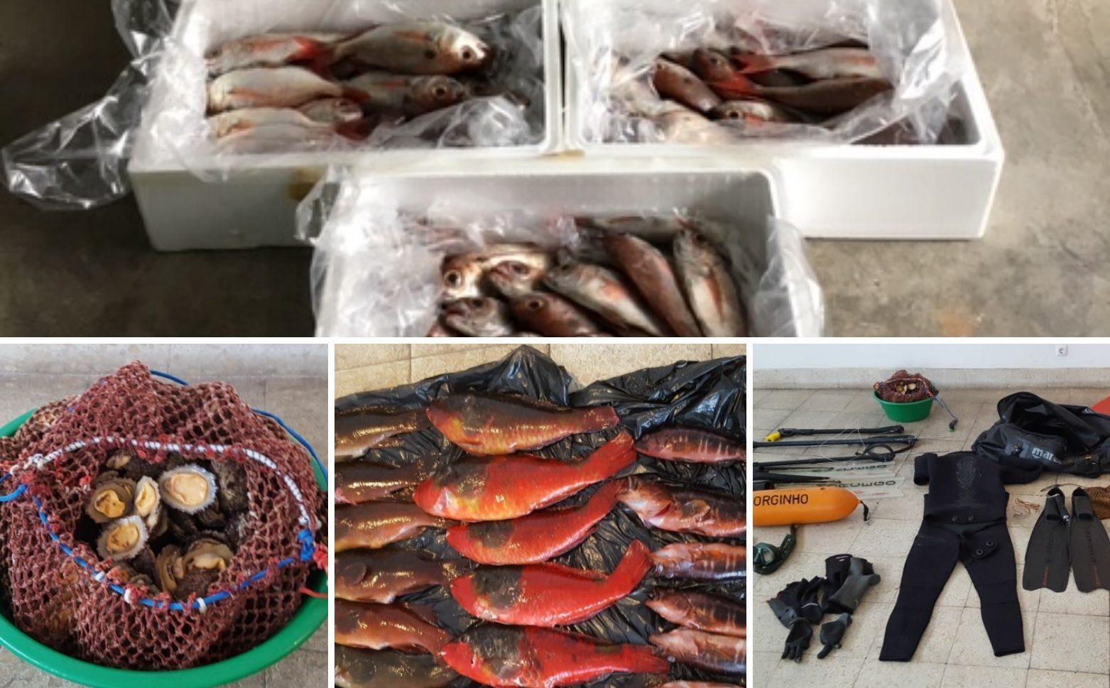 GNR apreende e doa 85 quilos de pescado em São Jorge e na Terceira