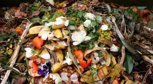 Governo dos Açores lança concurso público no âmbito de projeto piloto de recolha seletiva de resíduos orgânicos